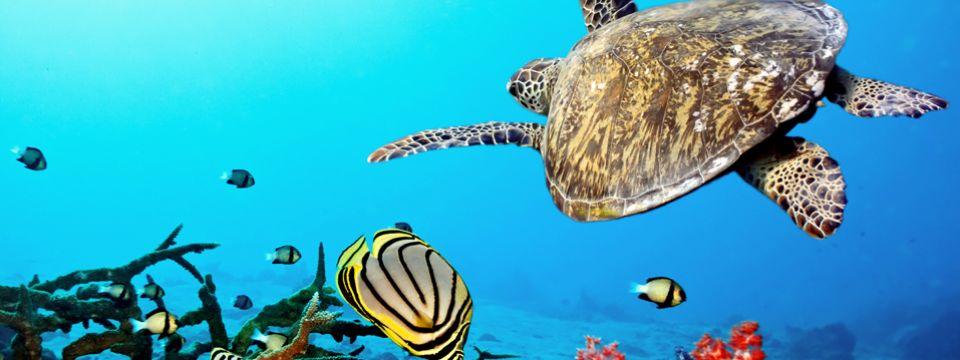 Carmar import export acquari e prodotti per acquariologia for Vendita on line pesci tropicali